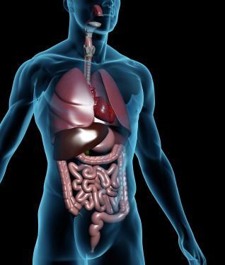 Biologia corpo humano